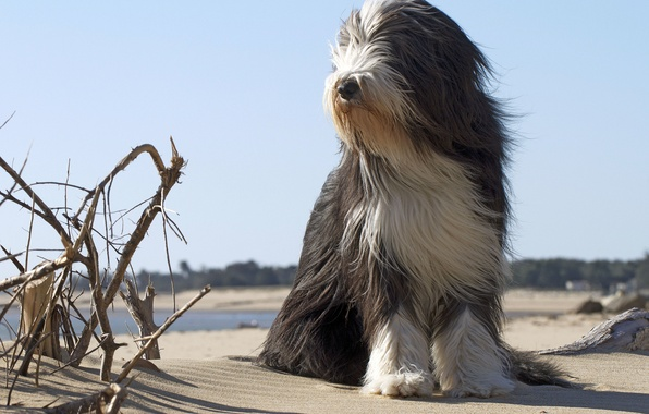 Picture beach, each, dog, dog