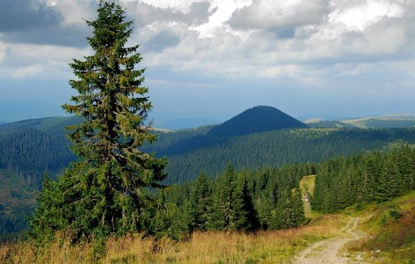 Picture road, forest, the sky, clouds, trees, mountains, hills, spruce