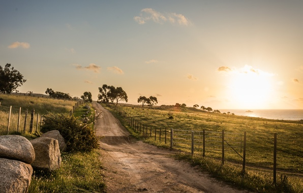 Picture road, trees, field, morning