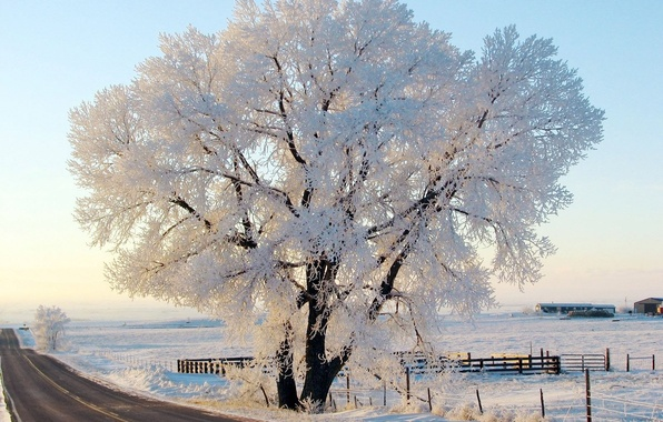 Picture winter, frost, road, the sky, nature, tree