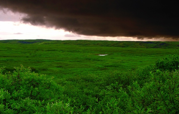 Picture field, grass, clouds, storm, Green