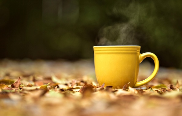 Picture autumn, leaves, macro, background, widescreen, Wallpaper, mood, blur, yellow, couples, mug, Cup, wallpaper, leaves, widescreen, …