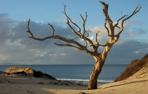Picture sand, beach, the sky, water, clouds, Tree, horizon