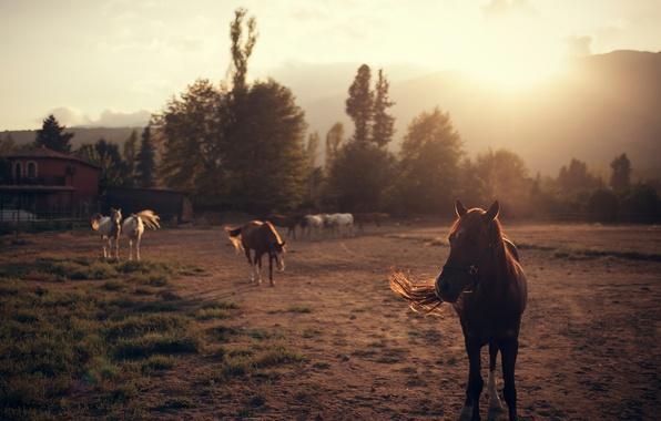 Picture horses, horse, Ivan Gorokhov