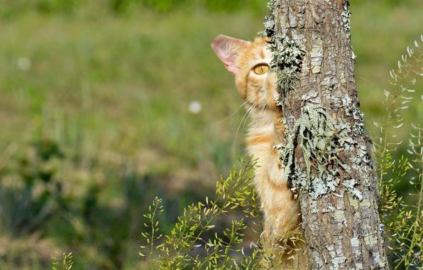 Picture cat, cat, tree