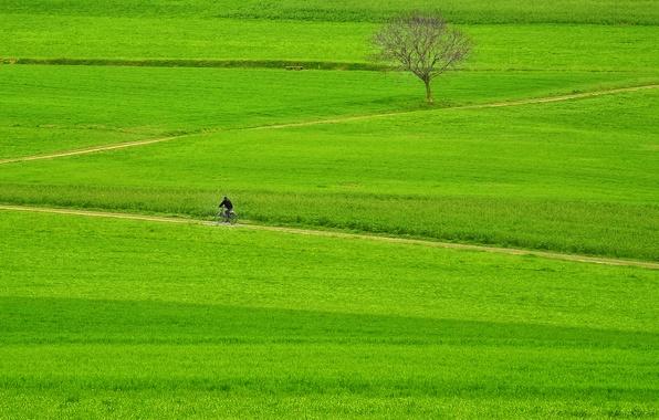 Picture green, grass, bike, fields, tree, way, man, pathway, rider, countryside, path, farmland