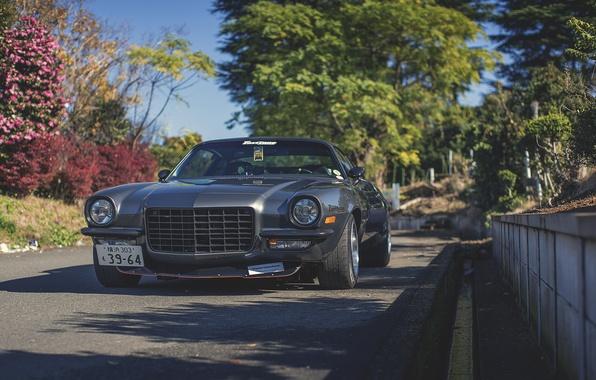 Picture Chevrolet, camaro, chevrolet, Camaro, fastlan, fastlane