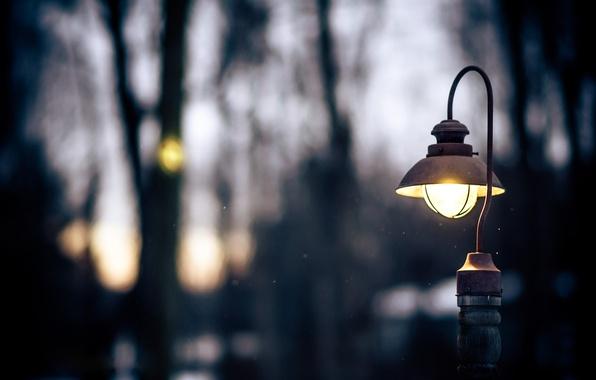 Picture winter, light, trees, nature, the evening, drop, lantern, snow, twilight.