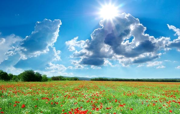 Picture photo, The sun, The sky, Nature, Clouds, Field, Summer, Maki, Landscape
