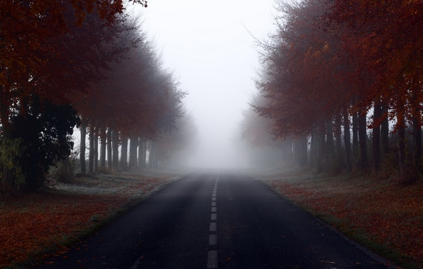 Picture road, trees, landscape, fog