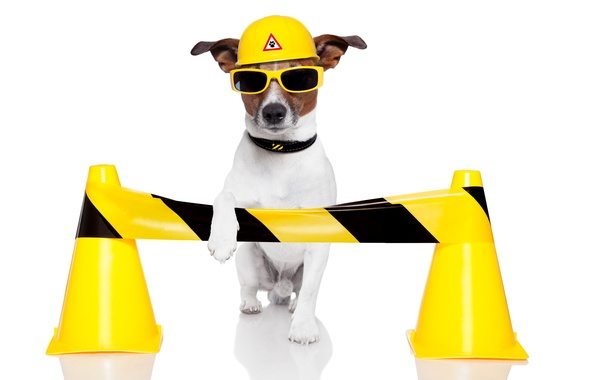 Picture dog, humor, yellow, glasses, white background, helmet, Jack Russell Terrier, traffic cones