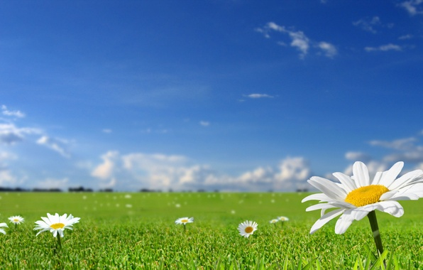 Picture field, summer, the sky, grass, the sun, flowers, nature, spring