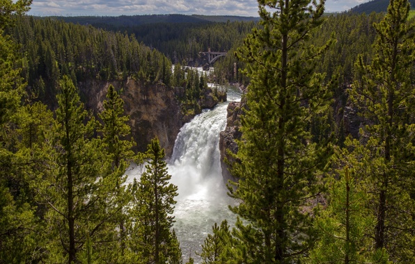 Picture forest, trees, river, waterfall, Wyoming, panorama, Wyoming, Grand Canyon, Yellowstone National Park, Yellowstone national Park, …