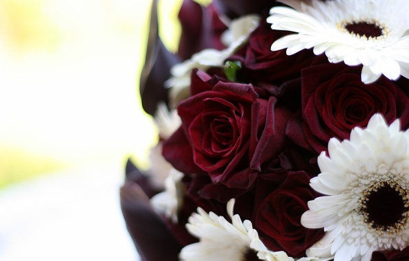 Picture white, macro, flowers, roses, bouquet, gerbera, Burgundy