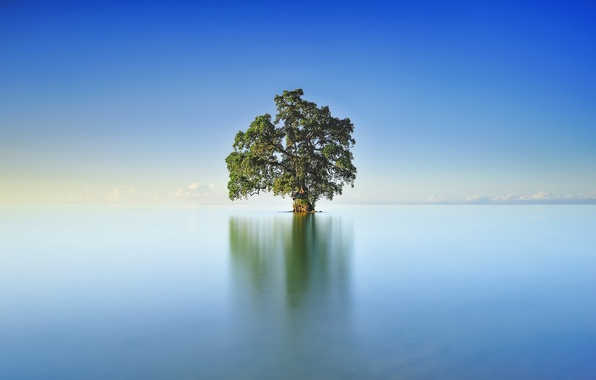 Picture the sky, clouds, lake, reflection, tree, mirror