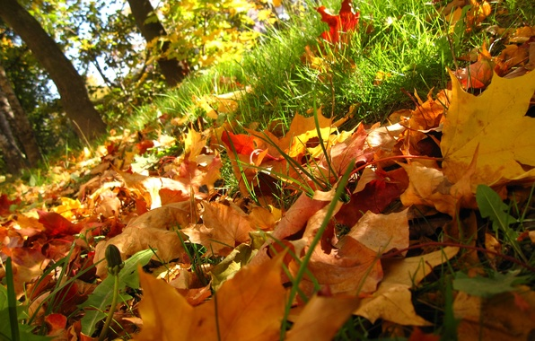 Picture autumn, grass, leaves, trees, Nature