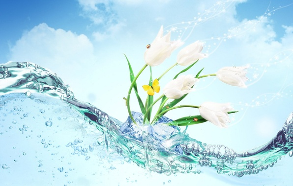 Picture ice, water, flowers, butterfly