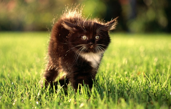 Picture grass, eyes, look, kitty, surprise, lawn