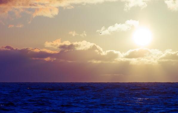 Picture sea, wave, the sky, the sun, clouds, bird, Seagull