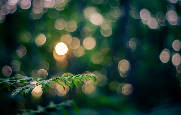 Picture leaves, macro, light, nature, sprig, branch, the evening, bokeh