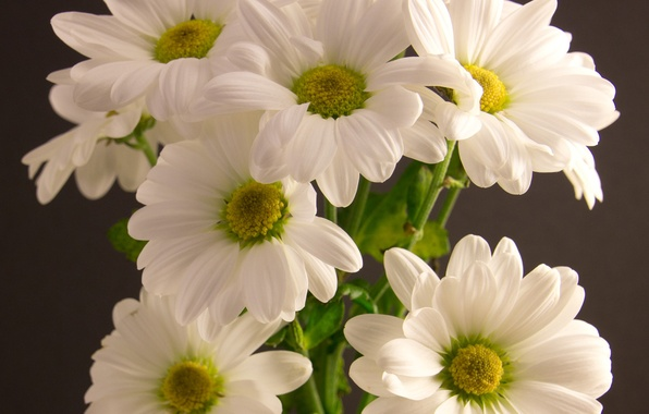 wallpaper flowers, bouquet, white, chrysanthemum images for, Beautiful flower