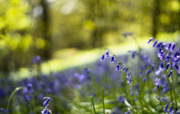 Picture forest, macro, flowers, glare, glade, blur, Bells, blue, lilac, bokeh