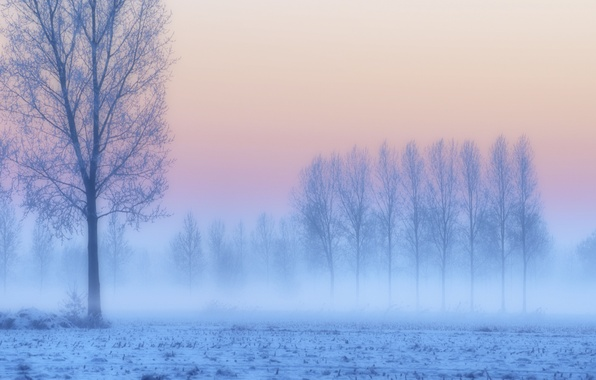 Picture frost, field, snow, trees, sunset, fog, lilac, pink, blue, Winter, haze, twilight