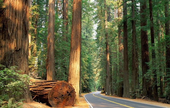 Picture road, forest, trees, nature, forest, trees road