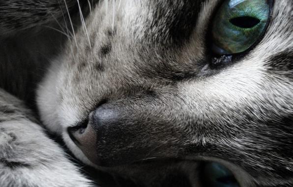 Picture Look, Koshak, nose