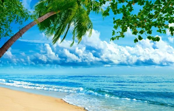 Picture sand, sea, clouds, tropics, palm trees, shore, horizon