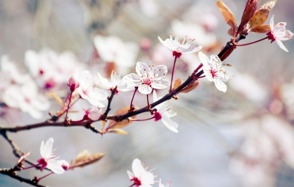 Picture leaves, flowers, nature, tree, branch, spring, blur, leaves, white, flowering