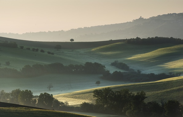 Picture trees, fog, hills, field, morning, Italy