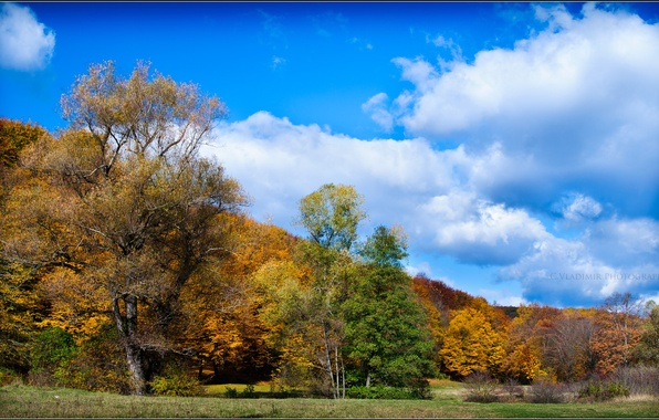 Picture autumn, the sky, clouds, trees, foliage