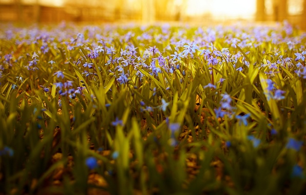 Picture nature, flowers, sunlight, wide angle, dof
