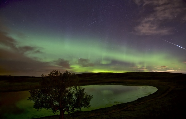 Picture the sky, stars, nature, tree, Northern lights