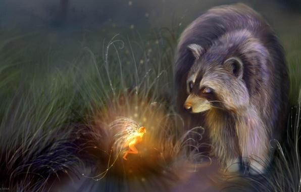 Picture night, stream, fantasy, fairy, raccoon, GERMANY, Bente Schlick