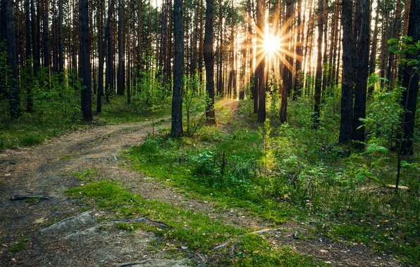 Picture forest, trees, nature, photo, trail, rays of light