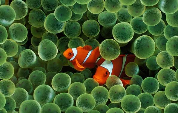 Picture wet, color, balls, macro, fish, fish, algae, strips, green garbage