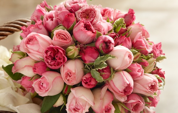 Picture roses, beauty, bouquet, petals, pink, buds, pink, Roses, beauty, bouquet