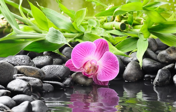 Picture flower, water, reflection, stones, bamboo, Orchid, black, orchid