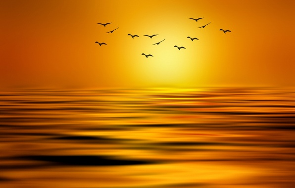 Picture the sun, birds, lake, paint, pack, styling, Josep Sumalla