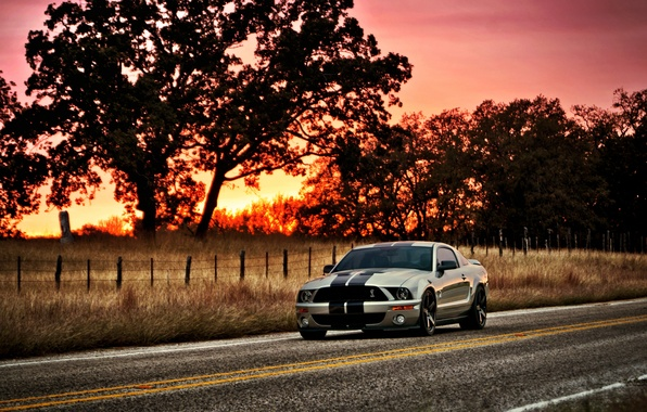 Picture the sun, sunset, tree, Mustang, Ford, Shelby, GT500, Mustang, silver, muscle car, Ford, Shelby, muscle …