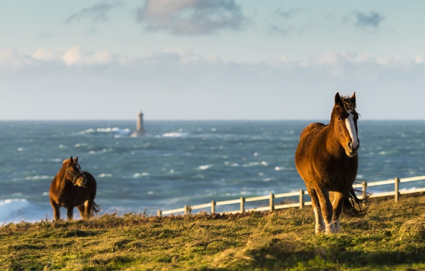 Picture sea, wave, field, the sky, the fence, lighthouse, horse, horizon