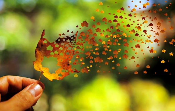 Picture autumn, leaves, background, the wind, widescreen, Wallpaper, mood, hand, blur, beautiful, leaf, wallpaper, leaf, widescreen, …