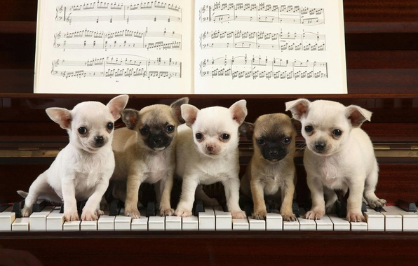 Picture notes, the game, piano, keys, puppies