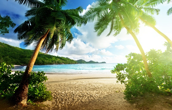 Picture sea, beach, the sky, clouds, landscape, palm trees, island