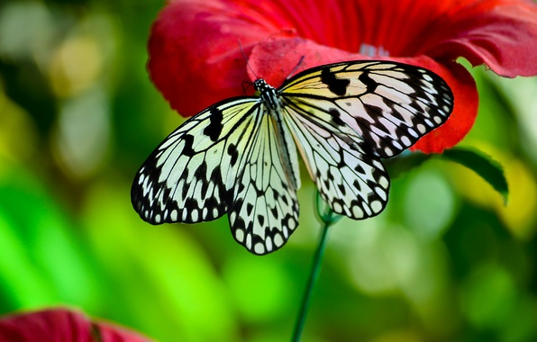 Picture macro, flowers, insects, butterfly