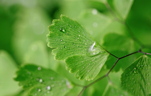 Picture water, drops, macro, nature, background, green leaves, wet