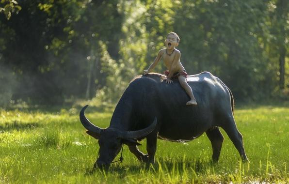 Picture mood, boy, rider, Thailand, Thailand, Buffalo