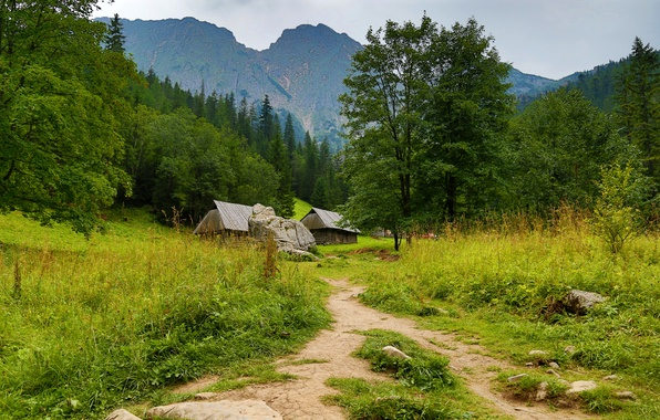 Picture forest, grass, trees, mountains, stones, Poland, houses, path, Zakopane